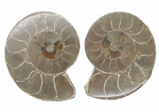 Ammonite, polished pair