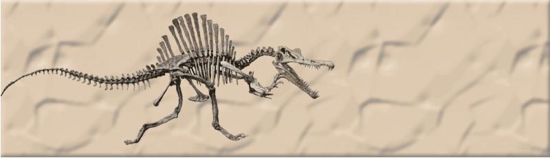 Fossils. Shark, Dinosaur, marine reptiles, Trilobites, Amber inclusions...